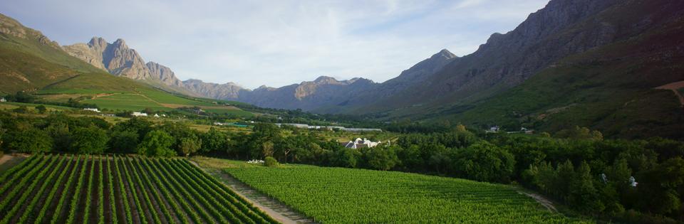vineyards at Lanzerac