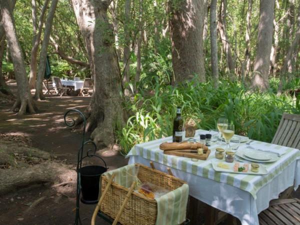 Vergelegen Camphor Forest Picnic