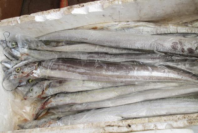 Stock up on fresh fish