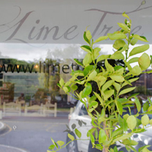 Lime Tree Café