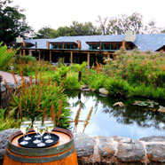 Moyo (Kirstenbosch)
