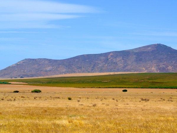 Swartland vistas