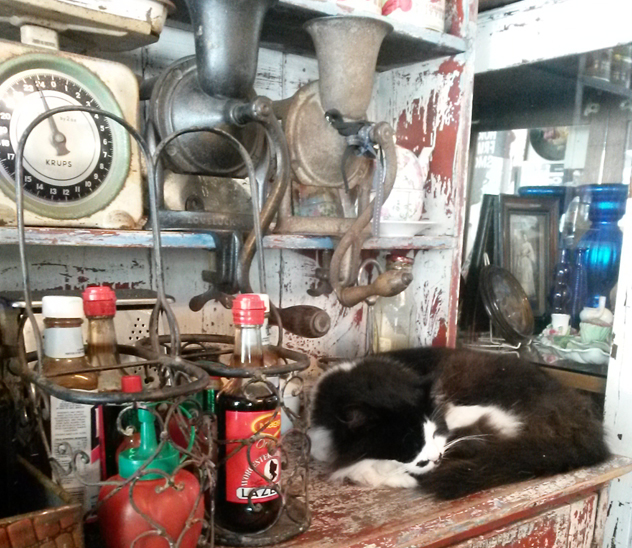 A snoozing cat at Cafeen in Harfield Village. Photo by Linda Scarborough.