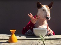 Bull terrier restaurant critic