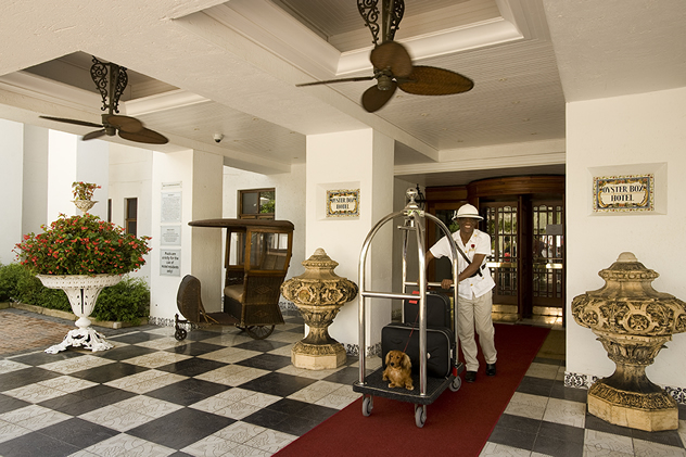 A dog on the hotel porter's baggage carrier at The Oyster Box Hotel. Photo courtesy of the restaurant.