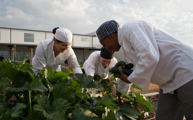 Organic ingredients being picked by the staff at Culinary Table. Photo courtesy of the restaurant.