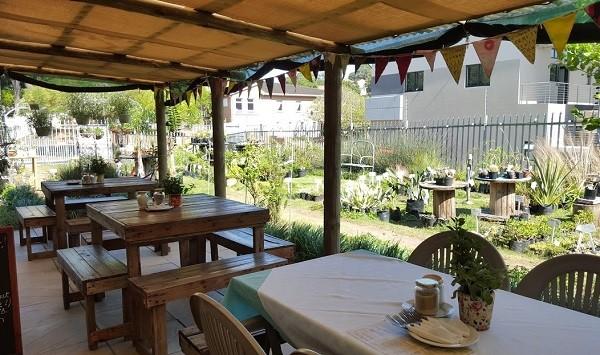 The tranquil garden at Dee's Café. Photo by Nikita Buxton.