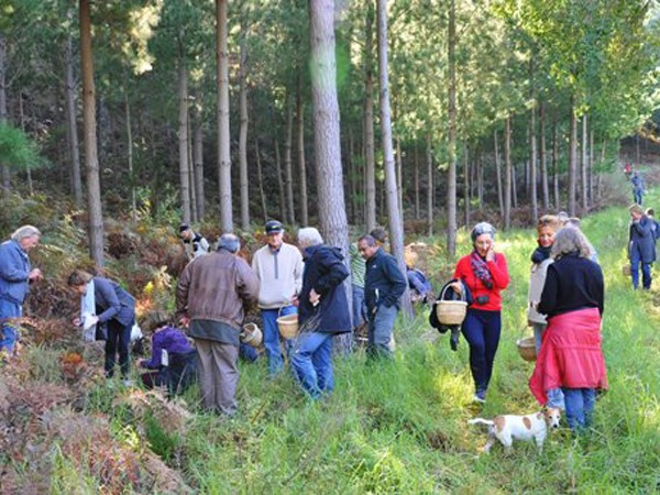 Foraging at Delheim. Photo supplied.