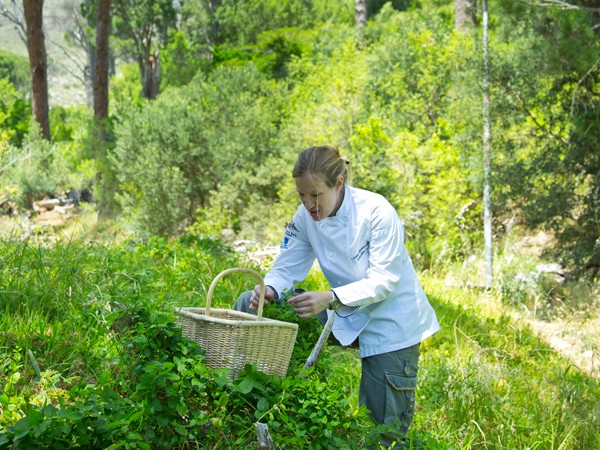 Foraging with chef Jocelyn Myers-Adams from The Table Bay Hotel.