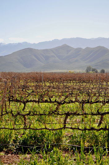 The-Robertson-Wine-Valley