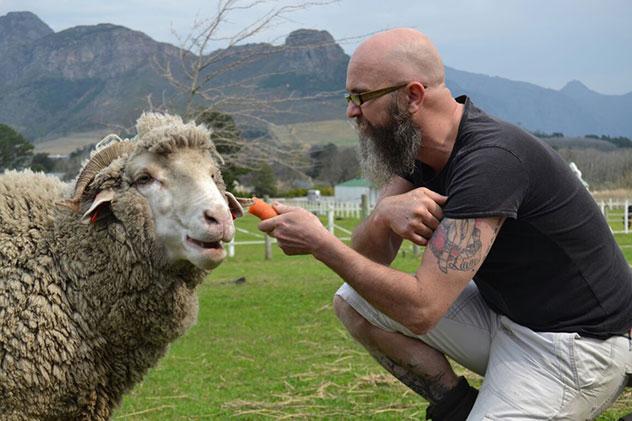 Bonus photo of Chris Erasmus feeding this hilarious sheep. Photo by Alisha Erasmus.