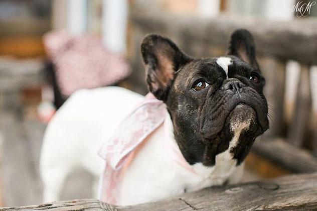 Vanessa-dog