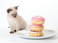 Stewy declined a doughnut. But his wise dining companion ordered some extras, just in case. Photo: iStock.