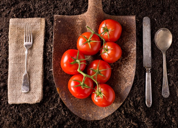 Biodynamic farming ensures sustainable and fresh produce. Photo: Thinkstock.