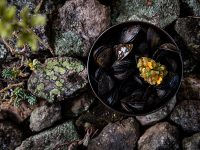Likoké mussels. Photo by Pieter D'Hoop