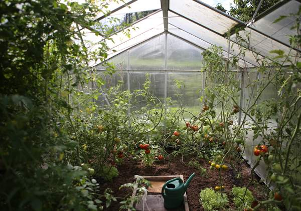A thriving greenhouse is everyone's dream.