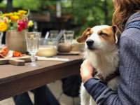 80+ dog-friendly restaurants in SA