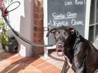 A dog at Big Dog Café