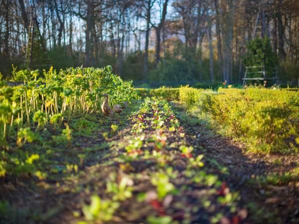 Vegetable garden at Boschendal. Photo supplied.