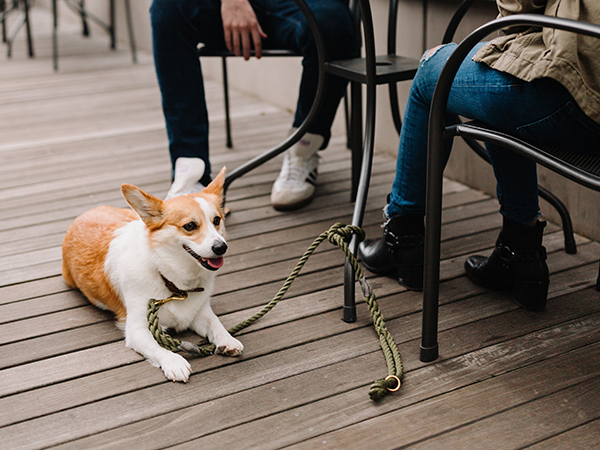 5 pet-friendly spots in Joburg
