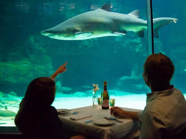 Deep dive into fine dining: Le coin Français to host a one-of-a-kind evening at the aquarium in support of ocean conservation